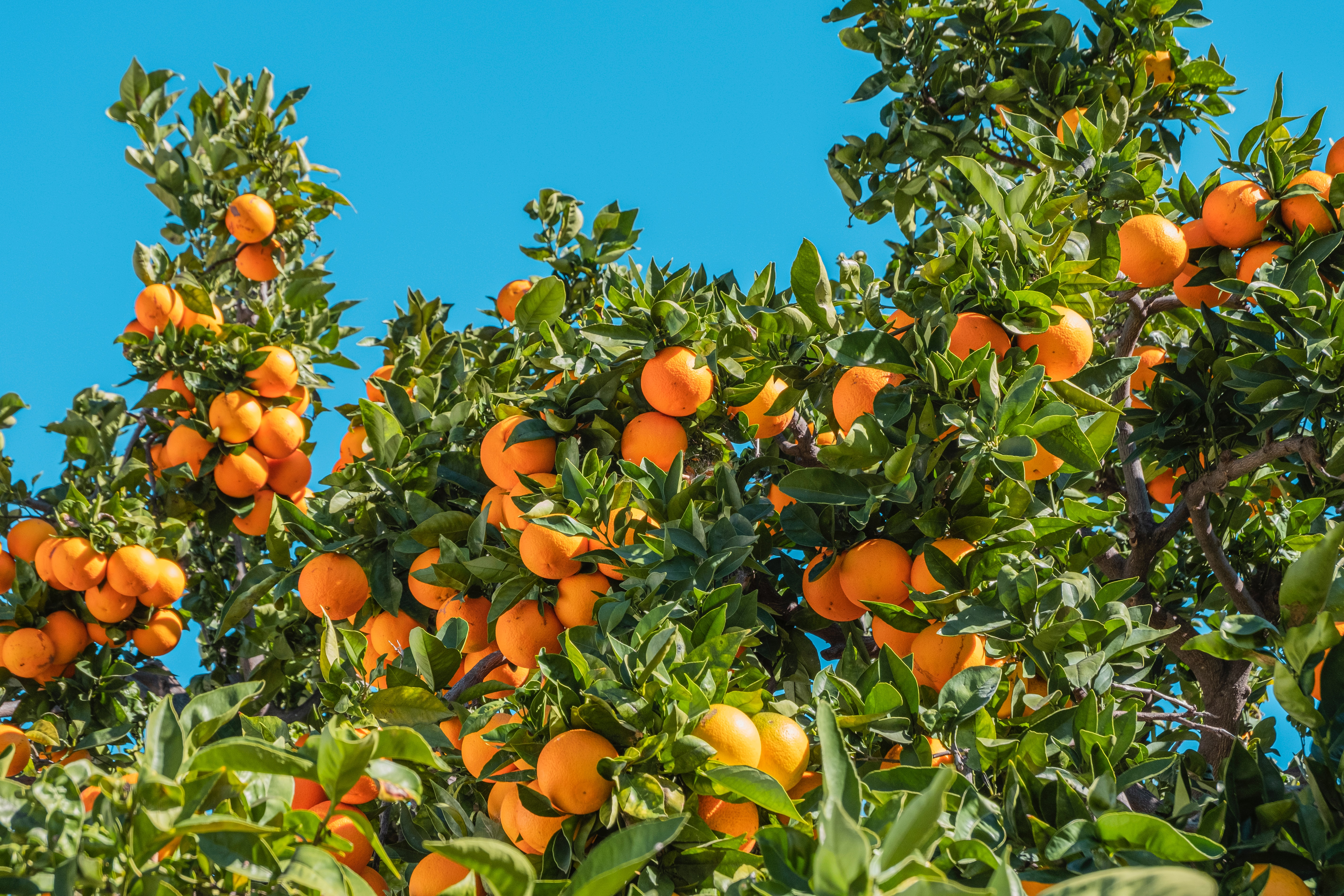 Orange Trees in the Desert, Fight or Flight and Emotional Regulation
