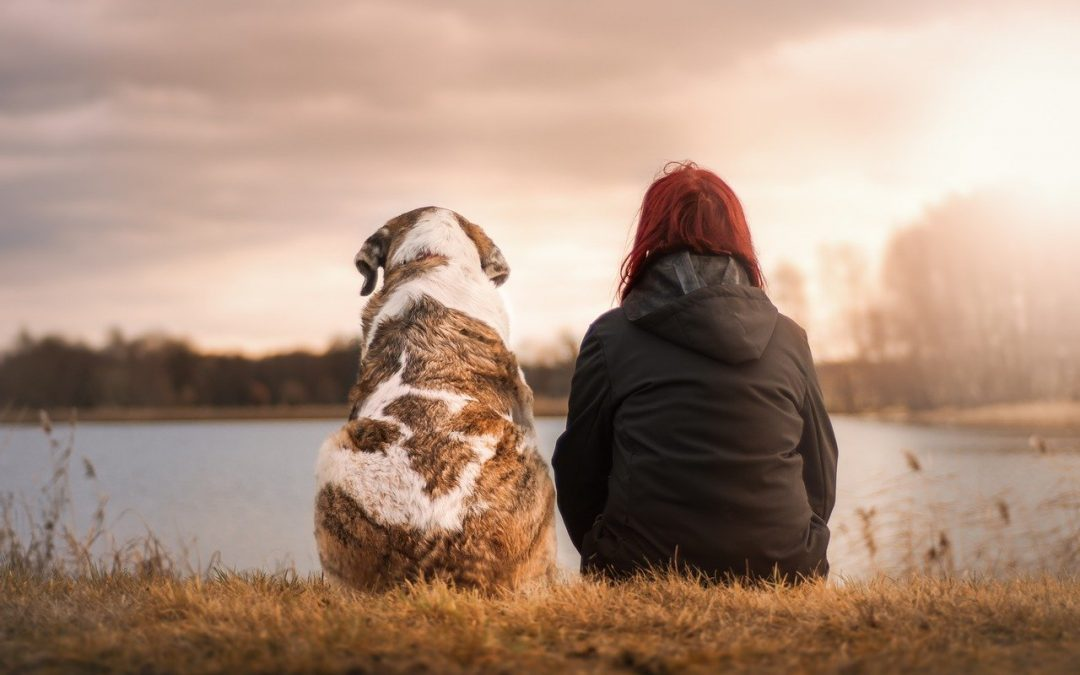 Why Pets Are Better Than People